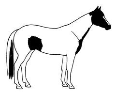 pinto Horse, side view, drawing