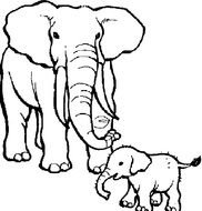 Circus Elephant Coloring Page drawing