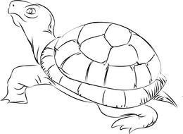 coloring page with a tortoise
