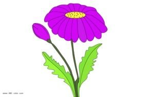 purple daisy flower at black background, drawing