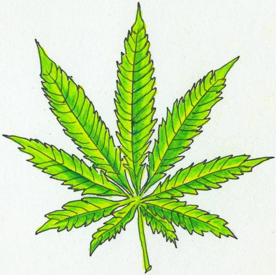 Рисовать марихуану как правильно перетирать коноплю