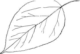 Leaf Outline Clip Art drawing