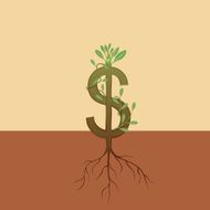 Dollar Growth tree root