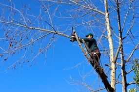 worker is sawing branches on a tree