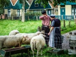 famers and sheep at zuiderzee outdoor museum