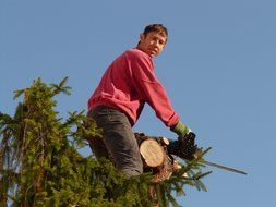worker with a chainsaw on a tree