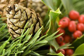 pine cone on Christmas wreath