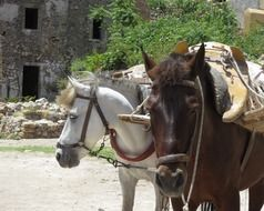 working horse head carrying