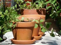clay pots in the garden