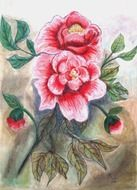 two pink peony flowers with buds, painting