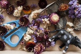 dry flowers and scissors on the table