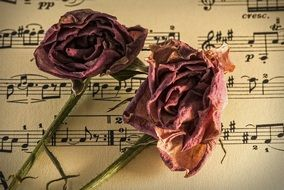 music and dry rose