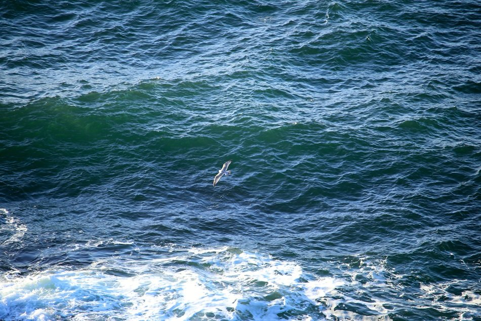 seagull soaring over waves