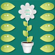 Daisy And Leaves Plant Infographic