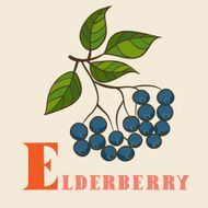 E for eldberry Vector Illustration hand-drawn style