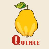 Q for quince Vector Illustration hand-drawn style