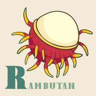 R for rambutan Vector Illustration hand-drawn style