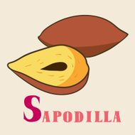 S for sapodilla Vector Illustration hand-drawn style