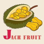J for jeck fruit Vector Illustration hand-drawn style