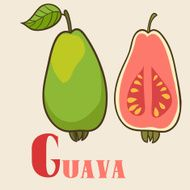 G for guava Vector Illustration hand-drawn style