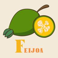 F for feijoa Vector Illustration hand-drawn style