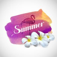 Summer label with frangipani flowers and flamingo
