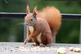 incredible beauty сute squirrel