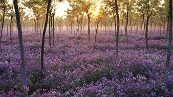 field of purple flowers in the forest