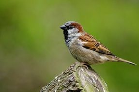 sparrow bird songbird nature