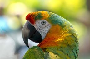 parrot with bright plumage close up