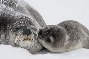 Photo of cute seal family