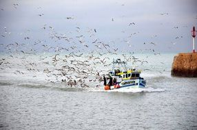 A flock of seagulls near the fishing boat