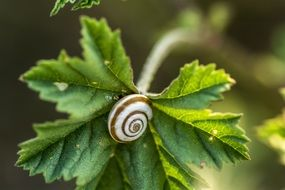 vine leaf snail nature green plant animal