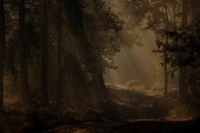 mysterious dark forest in the early morning