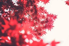 red leaves white sky view