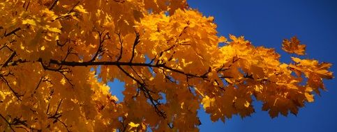 Orange leaves in sky