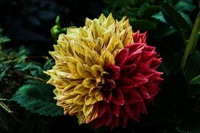 Yellow red amazing flower