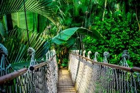 suspension bridge in the rainforest