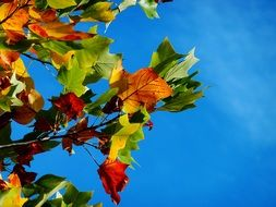 autumn leaves on a blue sky background