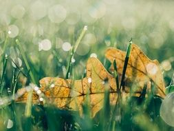 Yellow leaf among the green grass in the dew