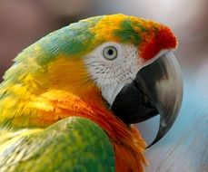 colorful macaw parrot head