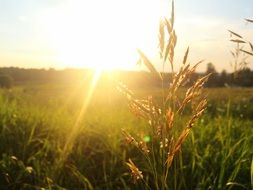 grass backlight sunset