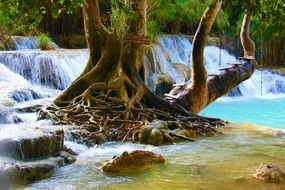 waterfall tree pool water nature