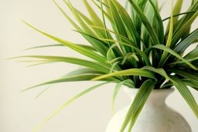 Green plant potted decorative white vase