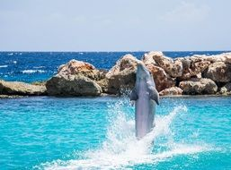Dolphin who jumps from the water