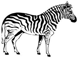 zebra side view drawing