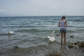 young girl feeding swans birds back look