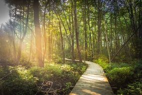 curved boardwalk in forest at summer