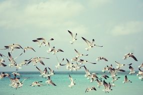A lot of seagulls on the beach