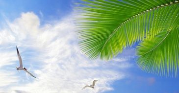 seagulls, green palm and blue sky